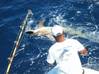 Sport fishing happy day today fort lauderdale shark for Florida fishing forum